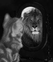 specchi_gatto